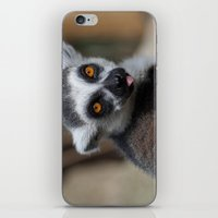 Ring Tailed Lemur iPhone & iPod Skin