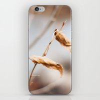 The Still Of Winter iPhone & iPod Skin