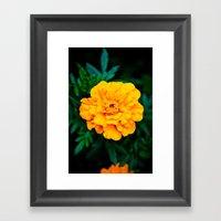 Tangerine Beauty Framed Art Print