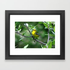 Blue-winged Warbler Framed Art Print