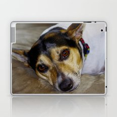 Terrier Laptop & iPad Skin
