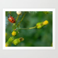 Lady Bug Dandelion Art Print