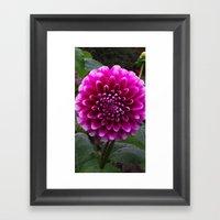 Flower In The Park Framed Art Print