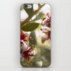 Botanical  iPhone & iPod Skin