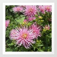 Pink Dahlia Flowers XIV Art Print