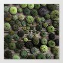 Urchins Canvas Print