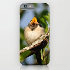 Singing swallow iPhone 6s Slim Case