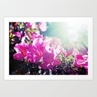 A Flare of Spring Art Print