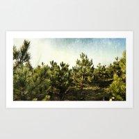 forêt d'épines Art Print