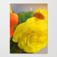 Luv Begonia 2 Canvas Print