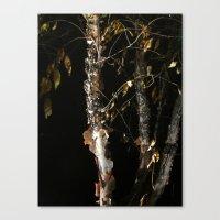 Birch A'peel Canvas Print