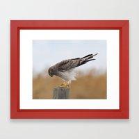 Harrier Framed Art Print