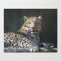 Leopard Alert Canvas Print