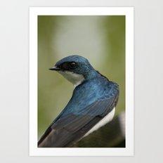 Tree Swallow - Ottawa, ON Art Print