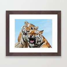 TIGERS - DOUBLE TROUBLE Framed Art Print