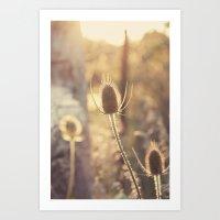 Sunlit Thistle Art Print