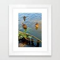 Ducks In Pont Framed Art Print