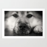 So Sleepy II - Dog Art Print