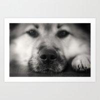 So Sleepy II - Dog Art Print