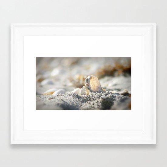 A Shell Framed Art Print