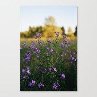 Pretty n Purple Canvas Print