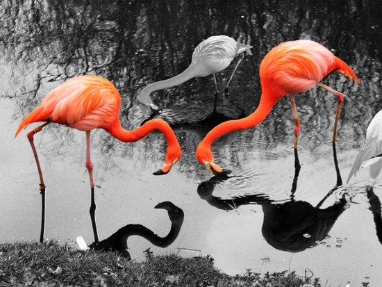 Matthew Cole Photography Art Print