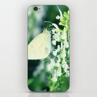 White Cabbage Butterfly On A Flower, Pieris rapae iPhone & iPod Skin