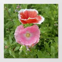 Two Poppys Bloom IV Canvas Print