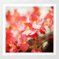 Scarlet Begonias Art Print
