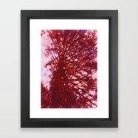 Redwood Tree Framed Art Print