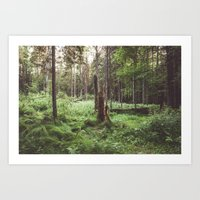 Primary forest Art Print