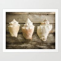 Conch Shells Art Print