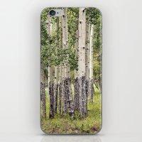 Summer Aspen Stand iPhone & iPod Skin