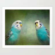 The Budgie Collection - … Art Print