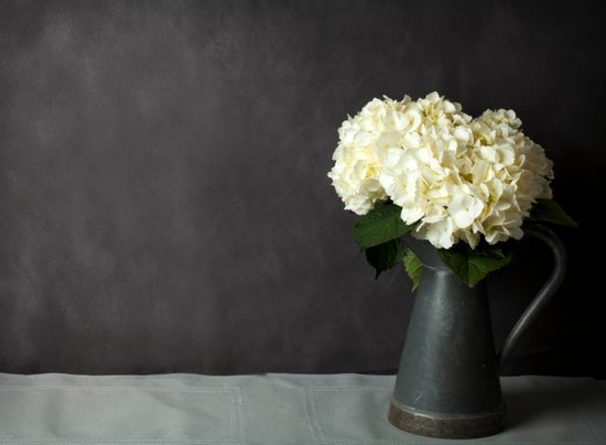 Hydrangeas in Gray - A Still Life Art Print