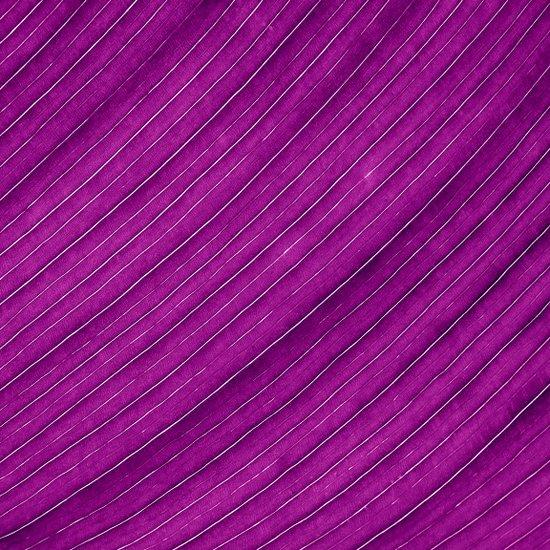 purple banana leaf Canvas Print