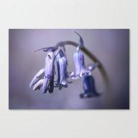 Bluebell Flower Canvas Print