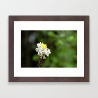 Oriental Paperbush Flower Framed Art Print