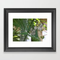 Papillon IV Framed Art Print