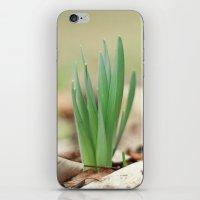 Daffidil iPhone & iPod Skin