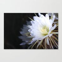 Queen Of The Night Canvas Print