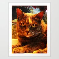 cat in bazaar Art Print