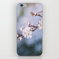 First Blossom iPhone & iPod Skin