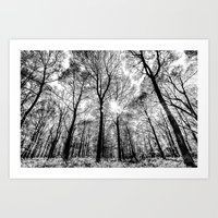 The Forests Sketch Art Print