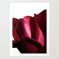 Lovely Rose Art Print