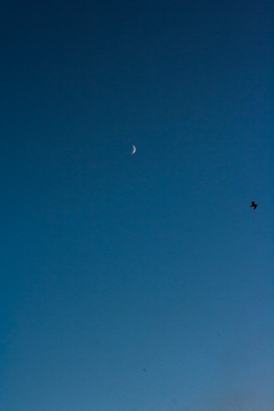 moon and seagull Art Print