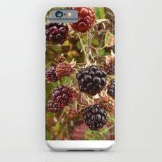 Autumn's Bounty Slim Case iPhone 6s