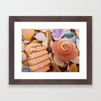 Macro Shells Framed Art Print