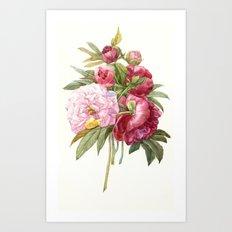 Passion peonies Art Print