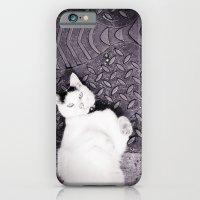 Animal :: Catfish iPhone 6 Slim Case